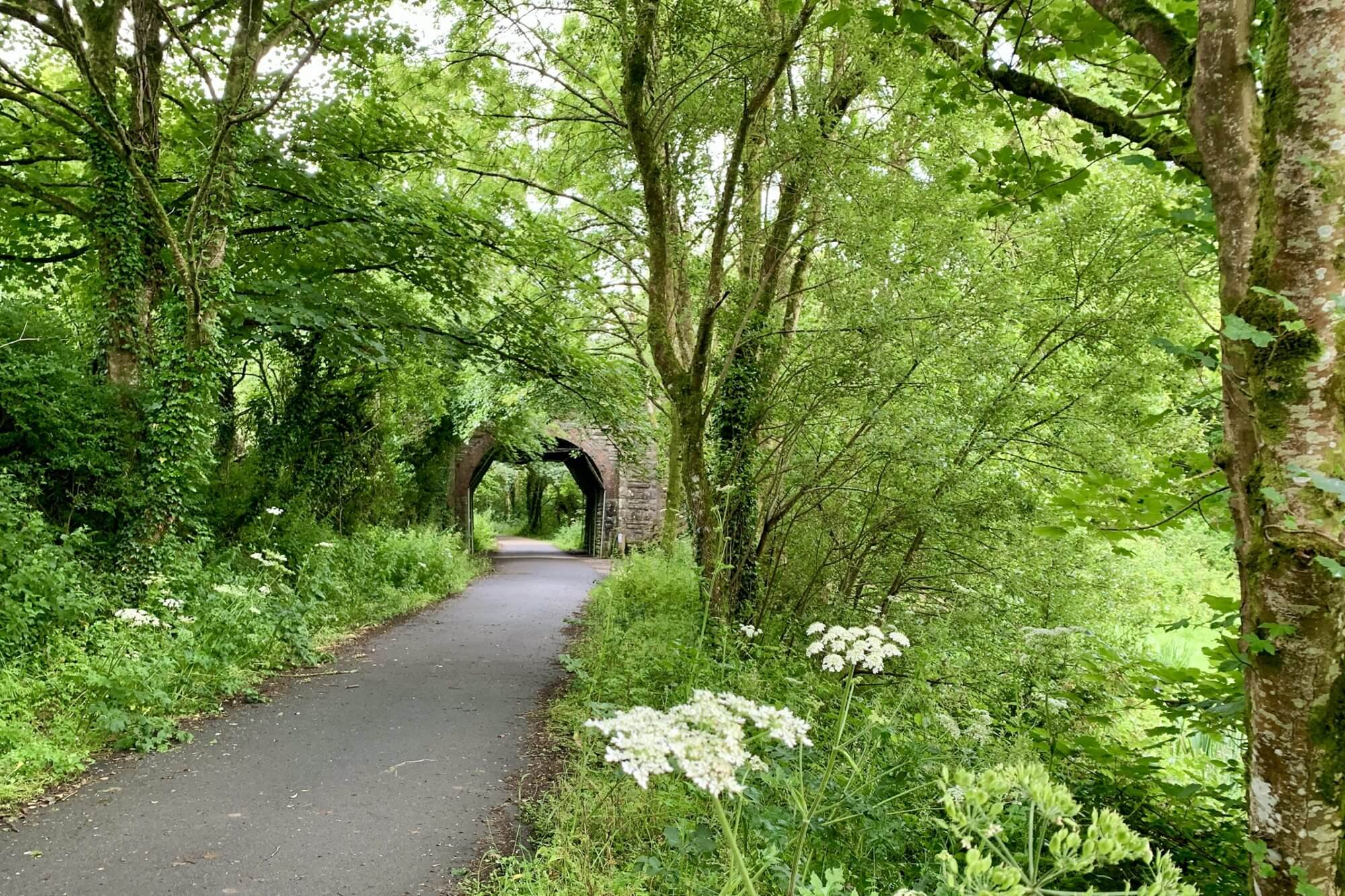 Wadebridge to Grogley Halt